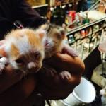 生まれたての子猫を見たコトがありますか?ノラ猫大国エジプト。
